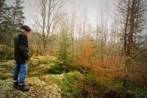 Rolf Viking, pålsbodasbo och medhjälpare att hitta platsen, blickar ner i det som troligtvis var platsen för avrättningen på Källbergsbacken.