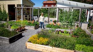 I köksträdgården är färgerna starka. Här växer sådant som är ätbart men även vackra blommor. Här finns grönkål, ärter, dill och brännässlor.– Det är något jag verkligen tycker om. Brännässlan är flerårig och kommer först på våren. Jag använder den i köket i grytor och till te.