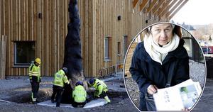 Konstnären Monika Gora har gjort verket Samtal med träd vars fundament gjutits i Guldsmedshyttan. Det står vid entrén till Bergsparken sedan i november.