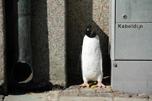 """Pingvin"". Arkivfoto"