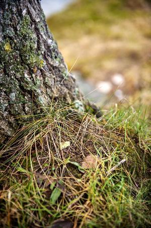 Gräset grönskar i Sundsvall trots att det är den 10 januari.