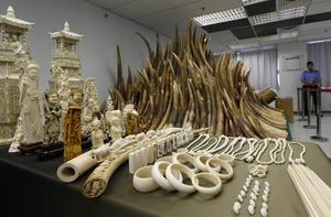 Köper du souvenirer av vilda djur på semesterresan bidrar du till förlust av livsmiljöer och överexploatering genom bland annat jakt och illegal handel som är de främsta orsakerna till den snabba minskningen av vilda djur,  skriver Världsnaturfonden.Foto: AP.