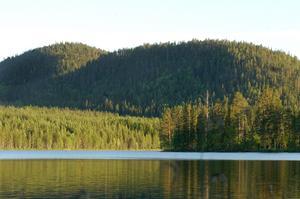 Storklaven är omgiven av betydligt mer påverkade skogar än den egna gamla naturskogen.