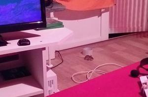 Insändarskribenten fick ovälkommet besök i sin hyreslägenhet – och fångade musen på bild. Foto: Privat