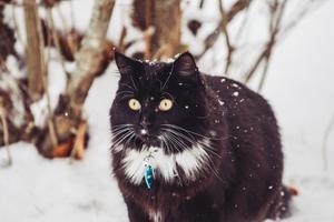 265) Kattungen Pysens första möte med snö. Foto: Malin Strömberg