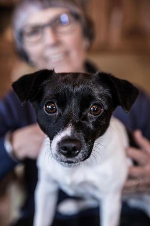 Tidigare hade Ingrid Ludwig Tysk jaktterrier. När hon skaffade Molly, en Jack russel terrier, började hon med nose work. Även en jakthund kan tränas i sporten, det kommer inte förstöra dess jaktinstinkt, berättar Ingrid Ludwig.