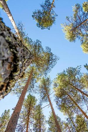 Fem nya förfrågningar om avverkning har skickats in till skogsstyrelsen.
