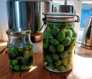 """Elin Unnes hade ett plommonträd som blev översållat med kart, som inte mognade. """"När jag klagade över det här så fick jag tips från två olika kockar – Daniels Jansfors och Niki Sjölund – att göra dem till """"oliver"""". Jag surfade upp ett inläggningsrecept på gröna oliver, modifierade det lite lätt och la in plommonkarten. När vi väl började äta de inlagda karten smakade de nästan exakt som gröna oliver, och ju längre burken stod, desto mer olivaktiga blev de."""" Foto: Privat"""
