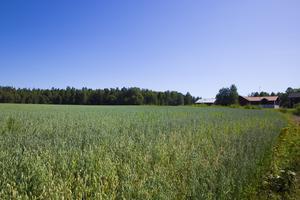 Det finns långtgående planer på att bygga en ny stadsdel i Månsbo.