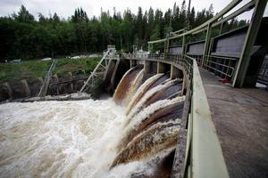 Dammluckor i Gideåbacka.