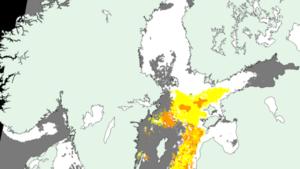 SMHI:s karta över algblomningen i Östersjön den 13 juli 2019. De orange fälten visar ytansamlingar och de gula fälten visar risk för ytansamling. De grå fälten är moln. Foto: SMHI