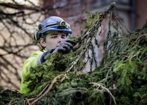 Anton Norborg fäster det sista granriset på julbockens rygg.