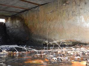 De så kallade skivpelarna, som är det bärande stödet på bron, har vittrat sönder. Enligt bro-experterna som undersökt konstruktionen har även själva armeringen släppt.