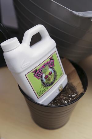 På internet säljs olika typer av växtgödning för cannabisplantor. Vissa sorter innehåller fladdermusbajs, berättar poliserna.