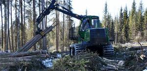 Själv ser jag skogen som ett ekosystem där människan ingår. Allt annat vore egentligen märkligt, skriver Mats Höög.