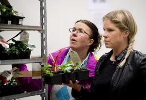 Eva Forslund och Sara Stavert är båda på jakte efter jordgubbsplantor. De ska vara goda och söta, de är de eniga om.