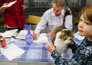 Huskatten Chevy fick ett fint pris, DSM, för att han blivit Best in show tio gånger. 8-åriga Milton Lund som äger katten var jättestolt. Domaren heter Henry Hornell och kommer från Norge.