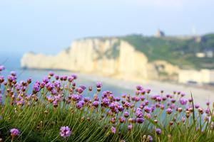 Vackert som en tavla. Res till Normandie för att upptäcka impressionisterna i sommar.