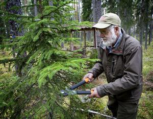 Röjning och klippning av granris till jaktpasset hör till jägarnas arbetsuppgifter inför den årliga älgjakten.