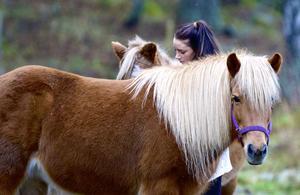 Katja Eriksson kollar till islandshästarna efter vargbesöket på gården i Blomsteränget, Korsheden.