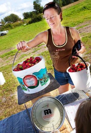 """""""Jag brukar göra marängbottnar med grädde och jordgubbar, sedan blir det väldigt mycket sylt"""", säger Marielle Brovinger efter en timme på Källmans odling."""