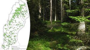 Skogsområden som har identifierats som särskilt höga ekologiska skyddsvärden.