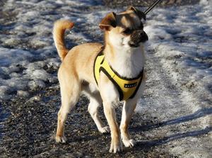 Jennie Berggrens ena hund Nemo skulle få springa och busa i hundparken.