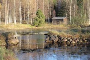 I dammen hämtar fåren vatten.