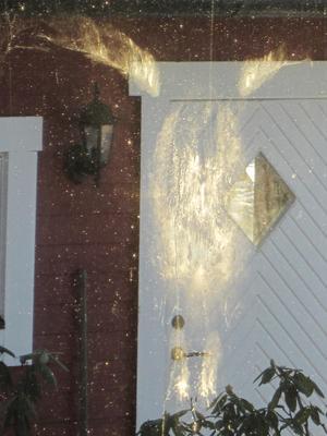 När vi kom till stugan och solen lyste in genom fönstret upptäckte vi avtrycket av en rovfågel som med stor kraft flugit in i rutan. Något fågelkadaver fann vi dock inte. Förmodligen har räven fått ett skrovmål.