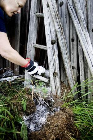 Bekämpning. Skadedjursteknikern Linda Askenberg gör en insats för att hindra stackmyrornas framfart.