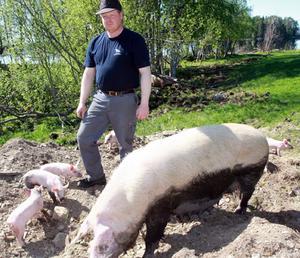 – Grisarna är sociala och intelligenta djur och jag räknar dem som mina kompisar, säger Magnus Gustaphsson.