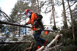 Skogen på Håstaområdet drabbades hårt av stormen.