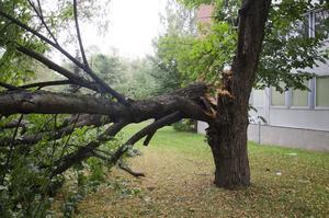 Ett träd i närheten av Badhusparken har skadats efter ovädret.