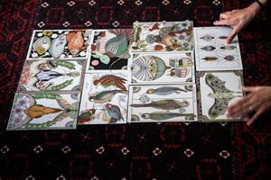 Karin lägger ut  ett urval av illustrationer för att visa dem.