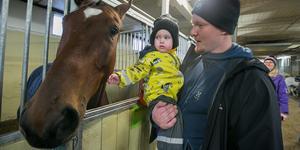Glimma Bergsten från Hackås  gillade de stora hästar hon såg och hon var trygg på pappa Alex arm. I bakgrunden mamma Anne.