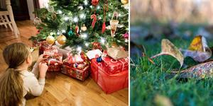 Det ser ut att bli en grön jul i östra och södra Dalarna.