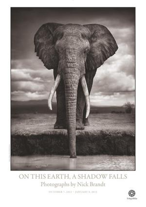 Poster av fotografen Nick Brandt. 150 kronor på Fotografiska.