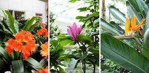 Det blommar nästan hela året i Bovieran förutom under en månad när trädgården vilar. På bilderna ser vi mönjelilja, magnolia och papegojblomma.
