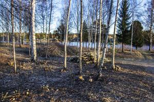 Bollnäs kommun har röjt skog och sly längs Framnäsvägen för att förbättra sikten ner mot älven.