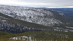 Vid Gammelnipan i Skorvdalens östra del syns vindkraftparken Rodovålen i bakgrunden. Foto: Bengt-Göran Carlsson