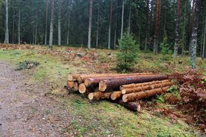 Här har träd fällts för att ge plats åt utomhusgymmet.