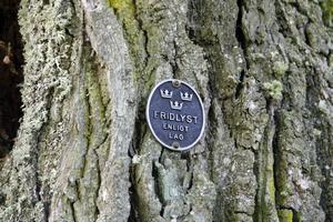 De gamla ekarna, många planterade för hundratals år sedan, är skyddade.