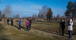 Svarthakedoppingar i sikte vid golfbanan. Foto: Lars Hägglund.