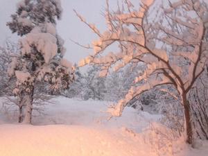 Vinter. Foto: Göran Greider.
