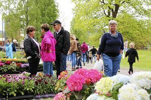 Försäljningen av egen odlad plant och grönskar vid Nordviksskolans Öppet hus är på väg tillbaka.