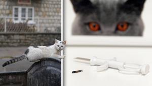 Med obligatorisk id-märkning skulle det vara lättare att följa upp och ta hand om hemlösa katter som lever i det vilda, skriver företrädare för Sverigedemokraterna. Bilder: Leif R Jansson/TT / Jessica Gow/TT