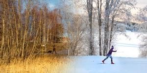 Montage av Maria Eilertsens och Eva-Lena Olssons bilder. Januari 2018 och 2020.