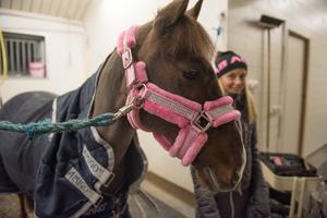 Munsboro Girl är 13 år – alltså året äldre än Nika Sundström – och hon gillar mat och att hoppa.