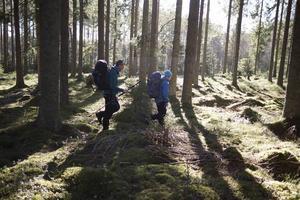 Det blev en två och halv mil lång vandring i Gästrikeskogarna.