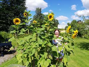 På Gästrike katthem i Valbo jobbar Ieva och har jobbat med att från frö till att odla fram dessa soliga blommor. En härlig sommarbild tycker vi. Foto: Vanja Hellström